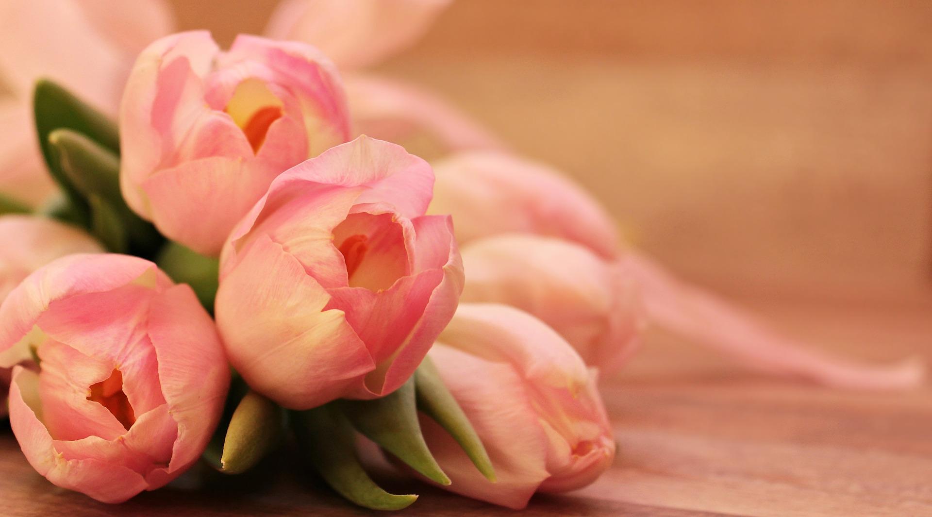 tulipas flores comércio flores online dia internacional da mulher 2019